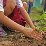 Un enfant plante des légumes après les saints de glace