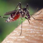 Comment éloigner les moustiques de façon naturelle?